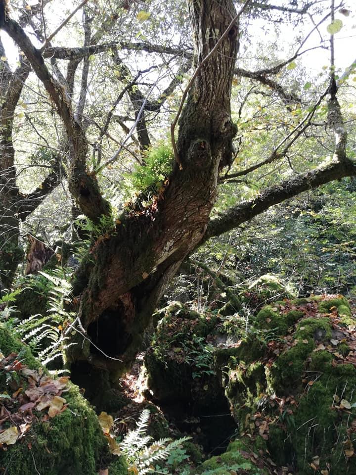 Bosco del Sasseto albero
